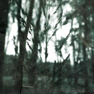 darkforest01