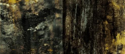 hornwood-digipack-02