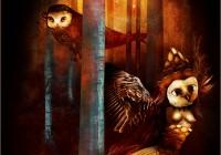Bosco delle civette - Owls wood